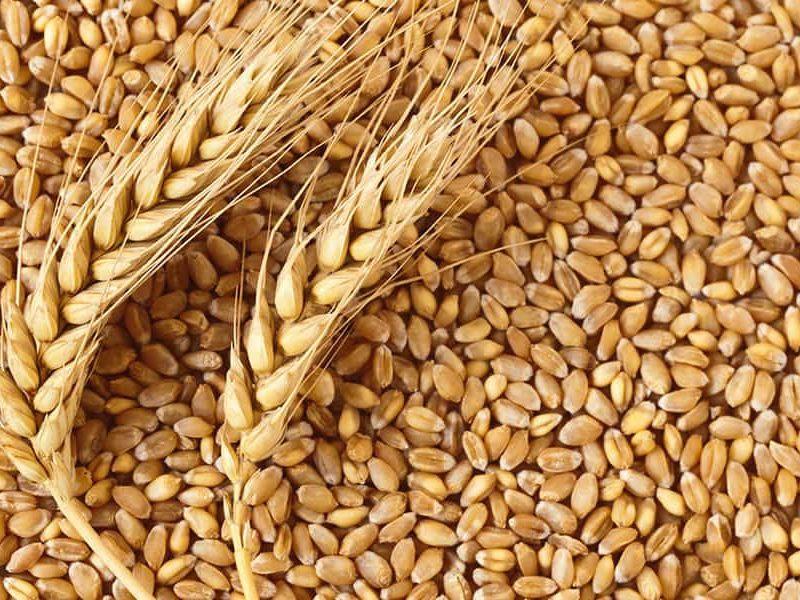 Фиктивные поставки зерна привели к уголовному делу