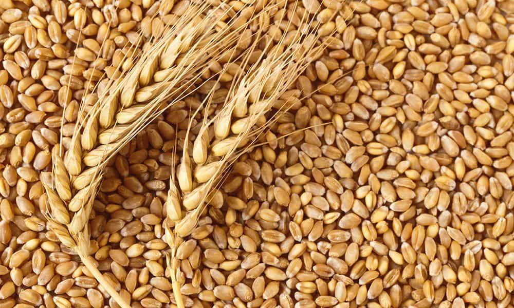 Минсельхоз начал рассчитывать «плавающую» пошлину на экспорт зерна