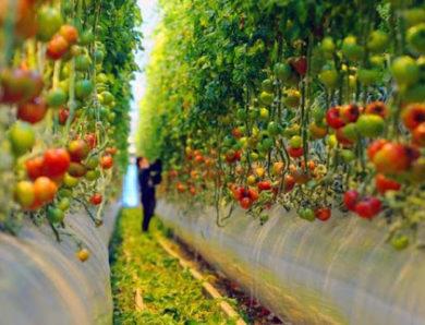 Правительство: Аграрий в Подмосковье получает в среднем от 37 до 52  тыс. рублей