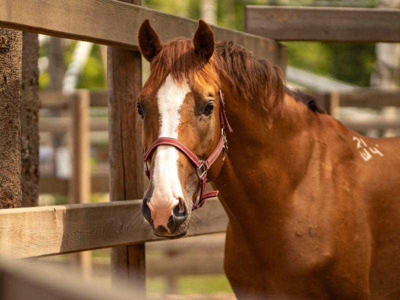 75 голов лошадей «Кремлевской школы верховой езды» прошли обследование