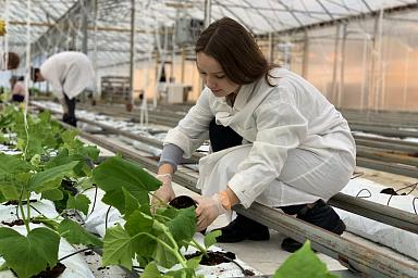 В текущем году Минсельхоз поможет трудоустроить более 4,5 тысяч студентов аграрных вузов