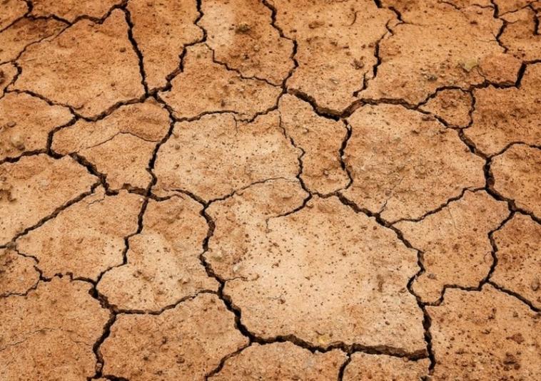The Guardian: засуха станет следующей пандемией