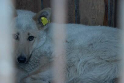 В Госдуме обсуждают  штрафы за жестокое обращение с животными, а в  судах появляется практика по новому закону