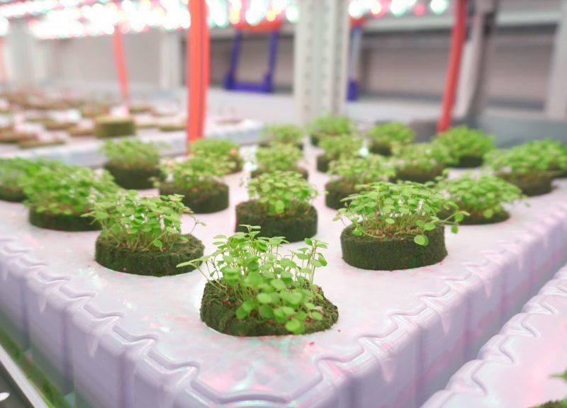 Дубай инвестирует в вертикальное фермерство