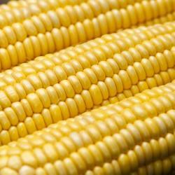 Приз за устойчивое фермерство выиграла ферма из Рима