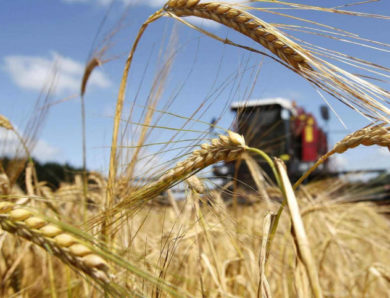 В России увеличиваются площади посева под нишевые сельскохозяйственные культуры