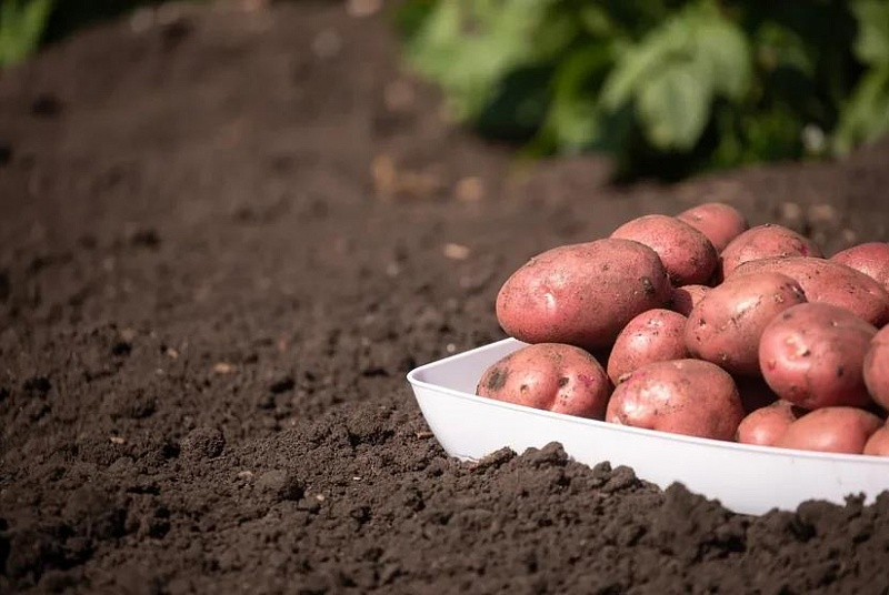 Азербайджан, Таджикистан, Туркмения увеличили экспортные поставки в Россию овощей и фруктов
