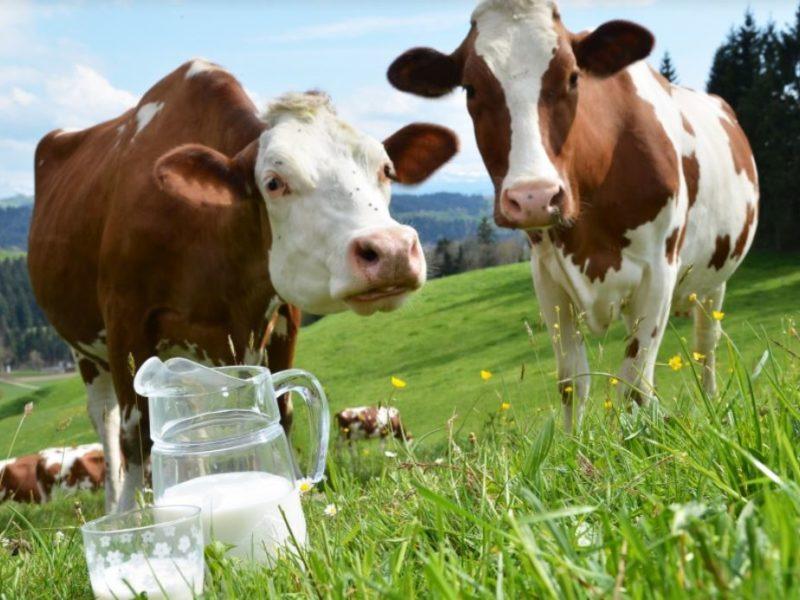 The Guardian: «Это про корову, это про то, как»: почему вегетарианец со стажем стал самым большим поклонником говядины