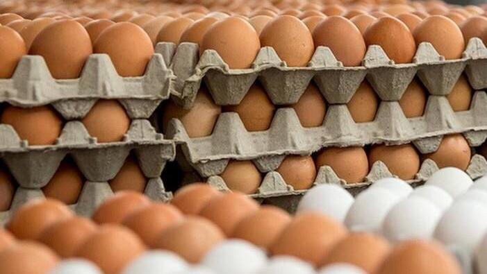 Почти полмиллиона яиц отправлено в Арабские Эмираты