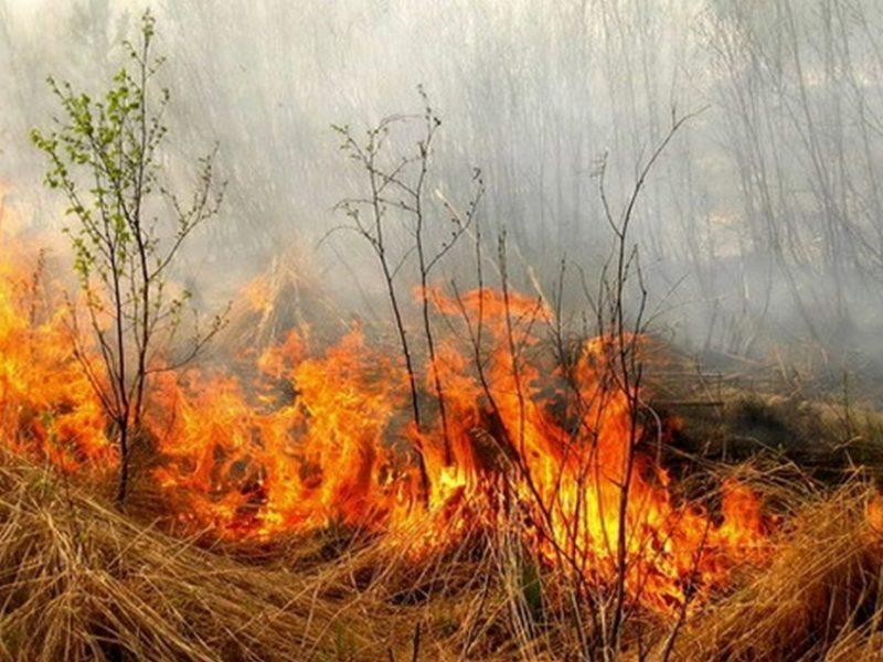 BBC: французские виноделы оценивают ущерб от пожаров