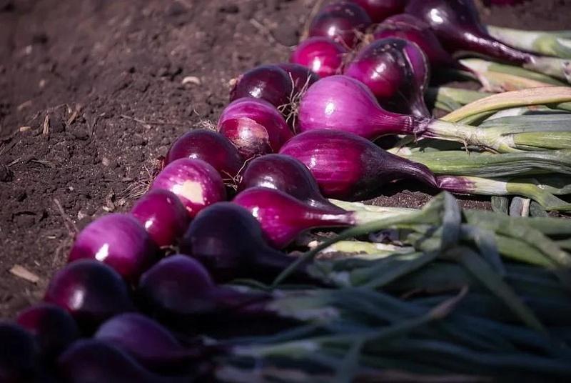 От отечественных семян до изобретений — на выставке «Всероссийский день поля»