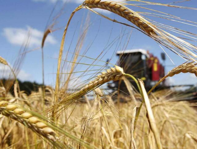 В Британии в сельском хозяйстве самая высокая смертность