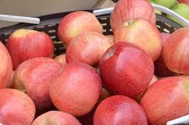 Российских яблок может стать больше