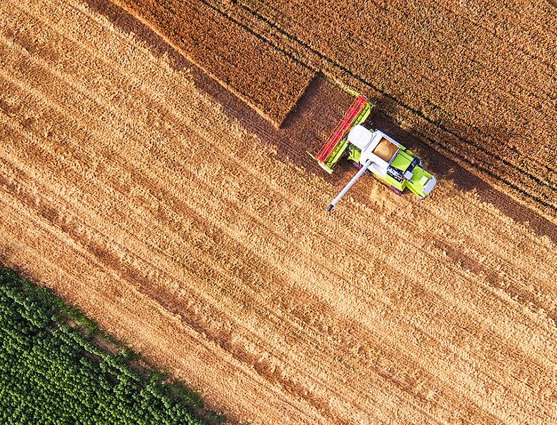 На объёме предложений отечественной продукции картофеля сказались последствия природных катаклизмов