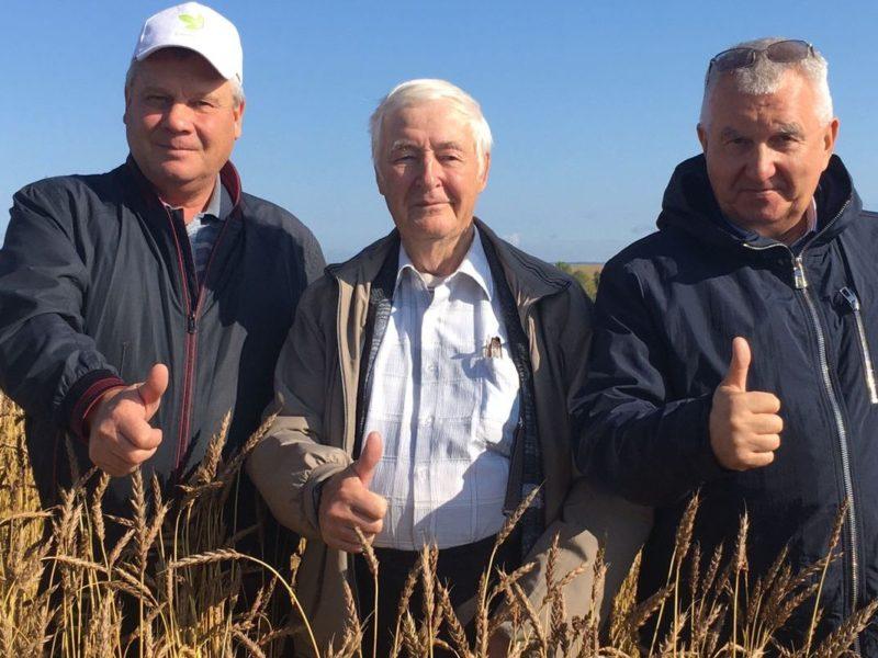 Более половины посевных площадей пшеницы Иркутской области заняты сортами уральской селекции