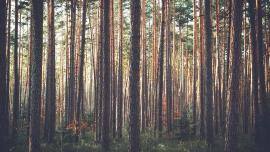 Возрождению лесов не помешало засушливое лето