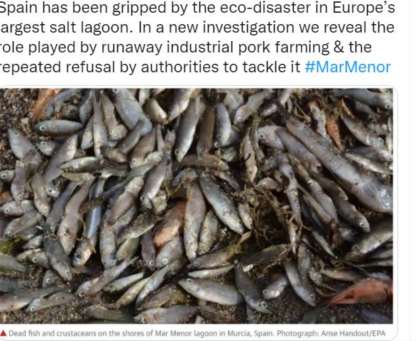 The Guardian: Свинофермы Испании обвинили в массовом вымирании рыбы